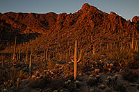 /images/133/2017-02-01-tucson-mountains-5d4_0067.jpg - #13600: Tucson Mountain Park … January 2017 -- Tucson Mountains, Arizona