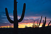 /images/133/2017-07-27-tuc-mtns-sunset-a7r2_00776.jpg - #13969: Sunset Saguaro silhouette in Tucson Mountains … July 2017 -- Tucson Mountains, Arizona