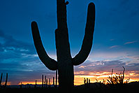 /images/133/2017-07-27-tuc-mtns-sunset-a7r2_00778.jpg - #13970: Sunset Saguaro silhouette in Tucson Mountains … July 2017 -- Tucson Mountains, Arizona