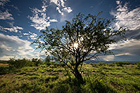 /images/133/2017-08-03-rita-sun-tree-a7r2_00199.jpg - #13976: Monsoon Clouds over Green Valley … August 2017 -- Green Valley, Arizona