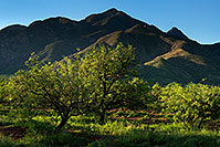 /images/133/2017-08-04-rita-green-6man-a7r2_00295.jpg - #13979: Green Valley and Santa Rita Mountains … August 2017 -- Santa Rita Mountains, Arizona
