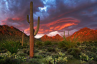 /images/133/2017-08-26-tuc-mtns-land-a7r2_02054.jpg - #14041: Sunset Saguaro in Tucson Mountains … August 2017 -- Tucson Mountains, Arizona