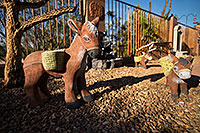 /images/133/2018-04-03-backyard-donkeys-m10_070.jpg - #14250: Donkeys in Green Valley, Arizona … April 2018 -- Green Valley, Arizona