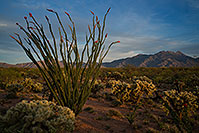 /images/133/2018-04-05-rita-ocotillo-mi100-a7r3_0687.jpg - #14261: Ocotillo and Santa Rita Mountains, Arizona .. April 2018 -- Santa Rita Mountains, Arizona