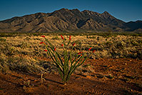 /images/133/2018-04-13-rita-ocotillo-mi100-a7r3_0978.jpg - #14278: Ocotillo and Santa Rita Mountains, Arizona … April 2018 -- Santa Rita Mountains, Arizona
