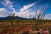 /images/133/2018-04-16-rita-ocotillo-morn-mi1-lq_0168.jpg - #14284: Morning at Santa Rita Mountains, Arizona … April 2018 -- Santa Rita Mountains, Arizona