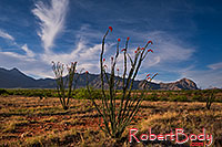 /images/133/2018-04-16-rita-ocotillo-morn-mi1-lq_0174.jpg - #14285: Morning at Santa Rita Mountains, Arizona … April 2018 -- Santa Rita Mountains, Arizona