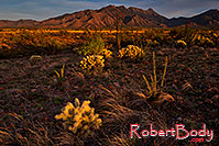 /images/133/2018-04-18-rita-cactus-2-lq_0271.jpg - #14287: Evening at Santa Rita Mountains, Arizona … April 2018 -- Santa Rita Mountains, Arizona