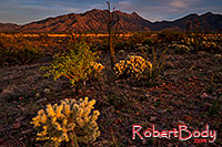 /images/133/2018-04-18-rita-cactus-7-lq_0276.jpg - #14288: Evening at Santa Rita Mountains, Arizona … April 2018 -- Santa Rita Mountains, Arizona