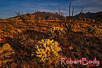 /images/133/2018-04-18-rita-cactus-lq_0267.jpg - #14289: Evening at Santa Rita Mountains, Arizona … April 2018 -- Santa Rita Mountains, Arizona