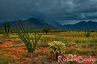 /images/133/2018-07-13-rita-viv1-3to5-a7r3_2242.jpg - #14485: Monsoon season in Santa Rita Mountains … July 2018 -- Santa Rita Mountains, Arizona