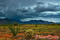/images/133/2018-07-13-rita-viv1-9to1-a7r3_2238.jpg - #14486: Monsoon season in Santa Rita Mountains … July 2018 -- Santa Rita Mountains, Arizona