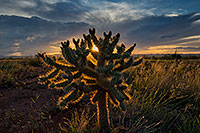 /images/133/2018-07-18-gv-cholla-ton1-a7r3_2718.jpg - #14484: Cholla sunset in Green Valley, Arizona … July 2018 -- Green Valley, Arizona