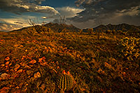 /images/133/2018-08-06-ritas-barrel-viv1-11to3-a7r3_3310.jpg - #14514: Santa Rita Mountains … August 2018 -- Santa Rita Mountains, Arizona