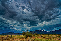 /images/133/2019-08-03-santa-rita-viv1ton7-6to9-a7r3_17855.jpg - #14742: Santa Rita Mountains … August 2019 -- Santa Rita Mountains, Arizona