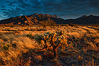 /images/133/2020-01-09-santa-rita-6to0-a7r3_20935.jpg - #14744: Evening at Santa Rita Mountains … January 2020 -- Santa Rita Mountains, Arizona