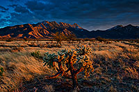 /images/133/2020-01-09-santa-rita-7to0-a7r3_20946.jpg - #14745: Evening at Santa Rita Mountains … January 2020 -- Santa Rita Mountains, Arizona