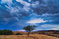 /images/133/2020-08-13-box-tree-7to1n81-a7r3_30776.jpg - #14827: Monsoons clouds in high desert of Box Canyon … August 2020 -- Box Canyon, Arizona