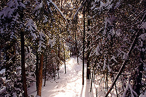 Bruce Trail in winter