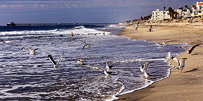 Seagulls in South Carlsbad