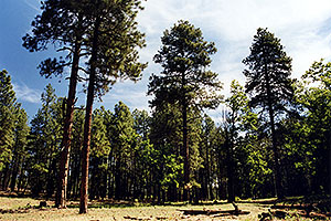 hiking by Flagstaff