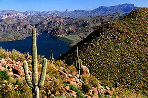 views of Saguaro Lake