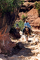 Horseback riders on Mules going down on Bright Angel Trail