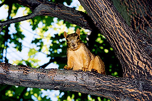 Squirrel in Denver