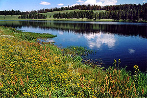 Indian Pond by Yellowstone Lake