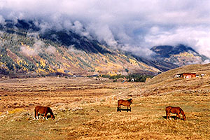 horses grazing with Slate River Road in background and fog over the mountains