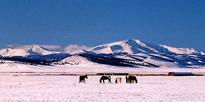 horses grazing on a cool winter day ... between Hartsel & Wilkerson Pass