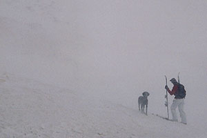 Backcountry Skier and dog in windy foggy conditions -- before skiing down east side towards Arapahoe Basin