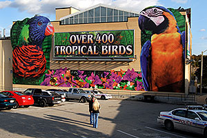 Over 400 Tropical Birds - Macaw picture … images of Niagara Falls