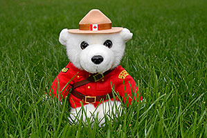 White Canadian RCMP (Royal Canadian Mounted Police) bear in the grass