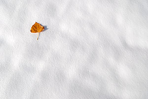 a lone leaf in Lone Tree