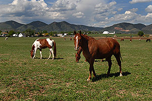 Horses in Lakewood, Colorado … Red Rocks in the background
