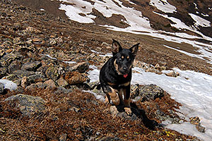 dog along the North Trail of Mt Elbert