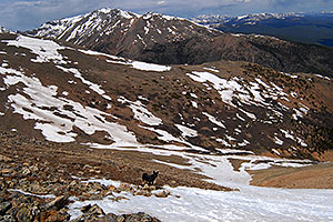 dog looking down Mt Elbert towards her owner far below, in the middle of the snowfield …  Mt Massive at 14,421 ft