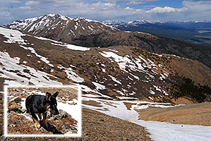 dog running in the snow down Mt Elbert towards her owner far below, in the middle of the snowfield