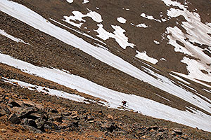 Skier walking across a snowfield on Mt Elbert