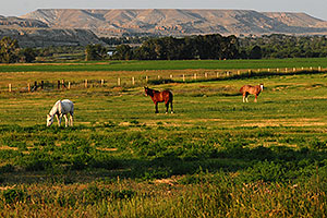 Horses grazing west of Riverton