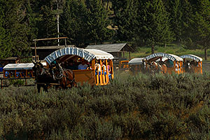 Horse Caravan on a trail ride at Roosevelt Corral near Tower Fall
