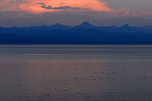 Ducks swimming at sunset at Yellowstone Lake