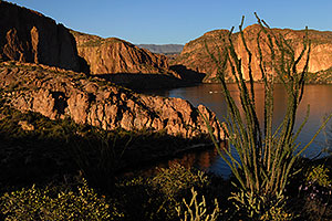 Ocotillo on the right above Canyon Lake in Superstitions
