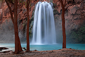 Cottonwood trees at Havasu Falls - 120 ft drop (37 meters)