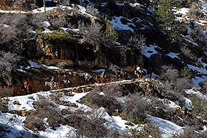 Mule riding group and snow spots along Bright Angel Trail in Grand Canyon