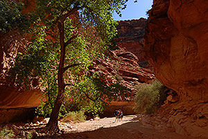 Hikers along Havasupai Trail of Havasu Canyon