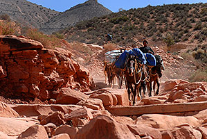 Mules carrying supplies 2 miles along Havasupai Trail (Hualapai Hilltop out of sight in top left)