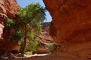 Along Havasupai Trail, 2 miles from Supai