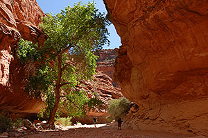 Hikers along Havasupai Trail, 2 miles from Supai